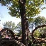 Drzewo kamerowe :p
