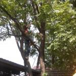Drzewo kamerowe :D